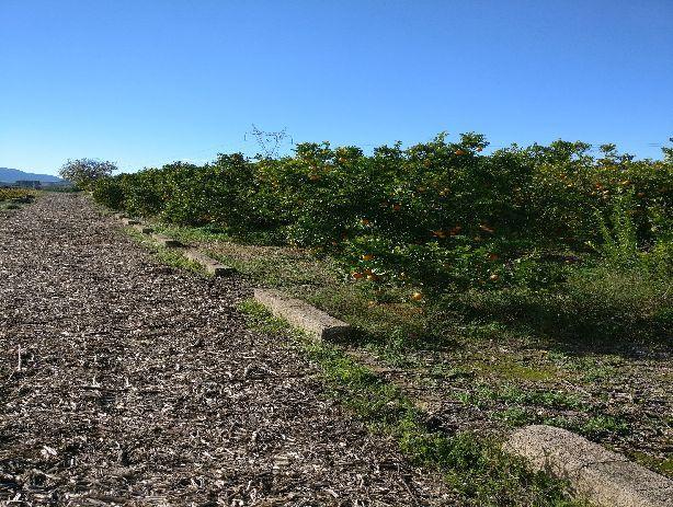 Venta de Terrenos en Montesa
